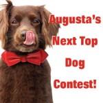 augustas-next-top-dog-logo