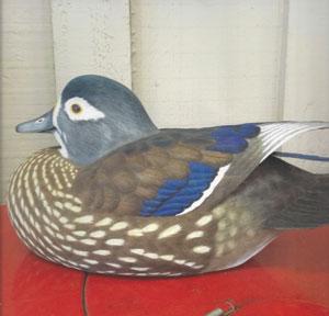 Wood-Duck-Hen