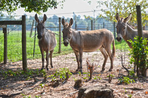 Donkeys-(I-love-this-pic!)